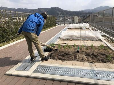 屋上菜園.JPG